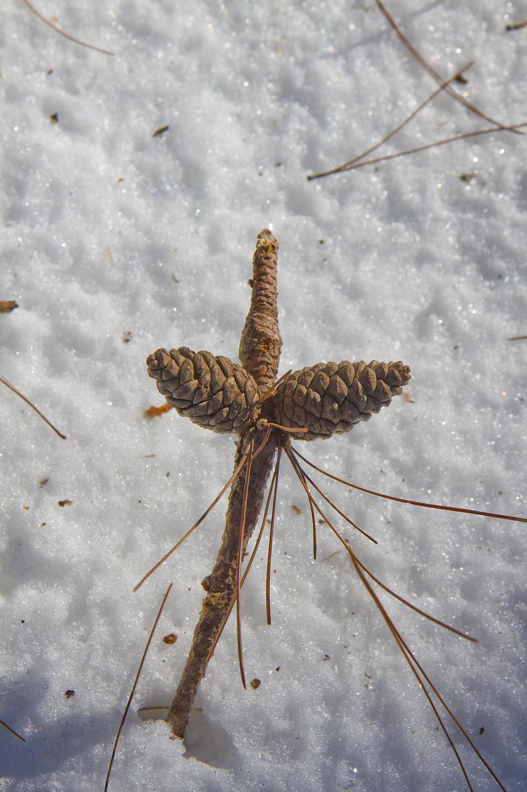 pine cone marker
