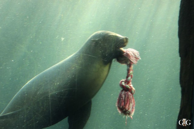 Besuch Zoo am Meer 30.12.201638