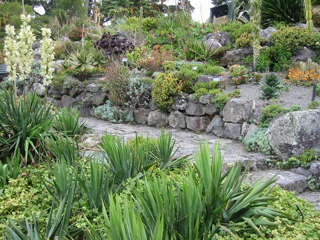 Succulent rock garden succulent garden wellington for Landscaping rocks wellington