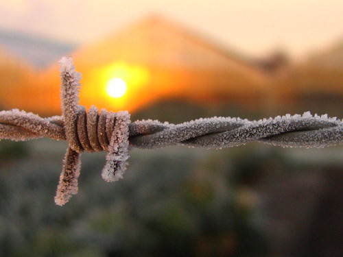 barbed frost | by hans solcer