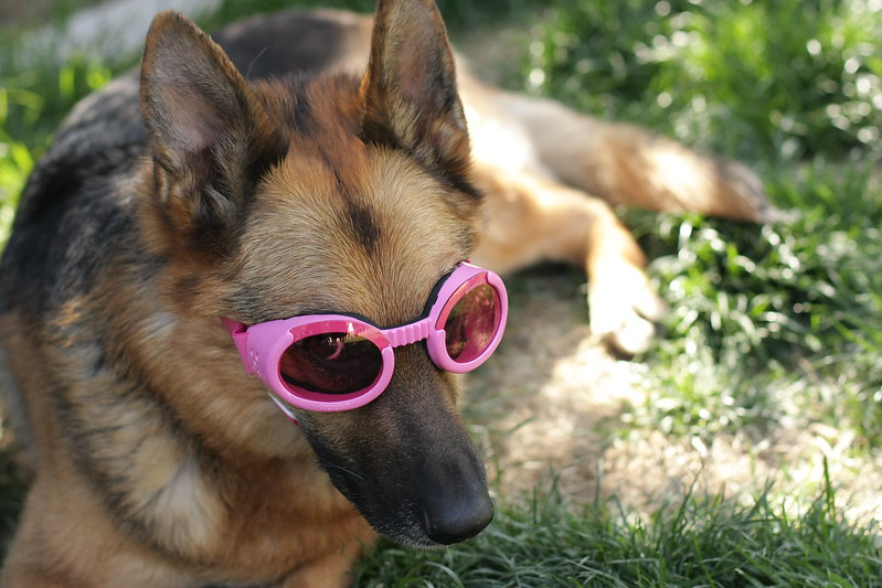 Nara in her doggles