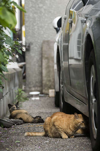Stray cats