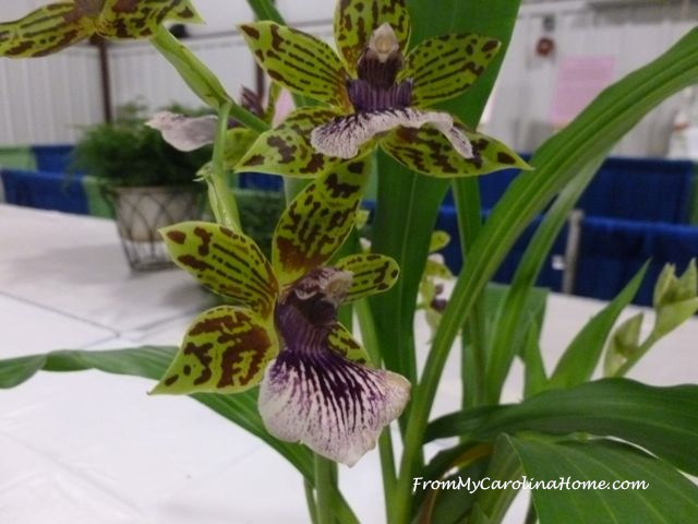 State Fair 2016 - Orchids green purple