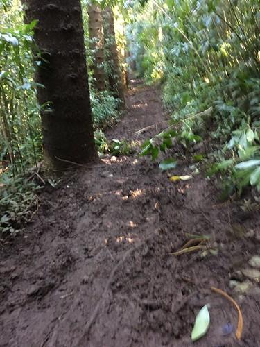 思ったほど泥濘んでいなかったNu'uanu。