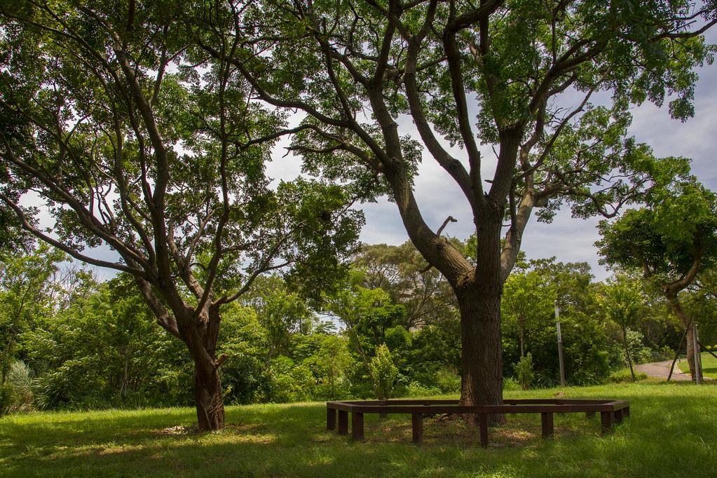 三位一體樹