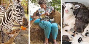 Woman Creates A Paradise For Animals