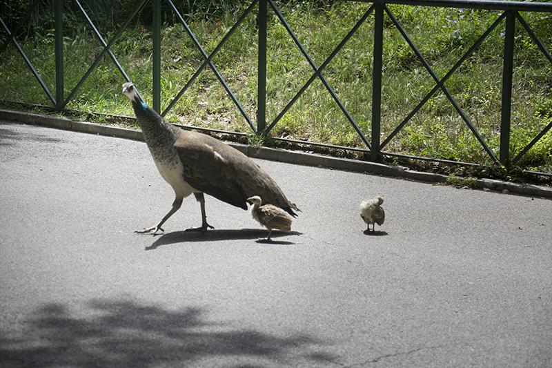 Zoo Roma