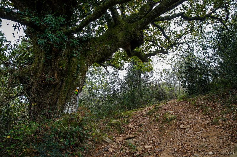 Marcas del sendero que baja del Azkar