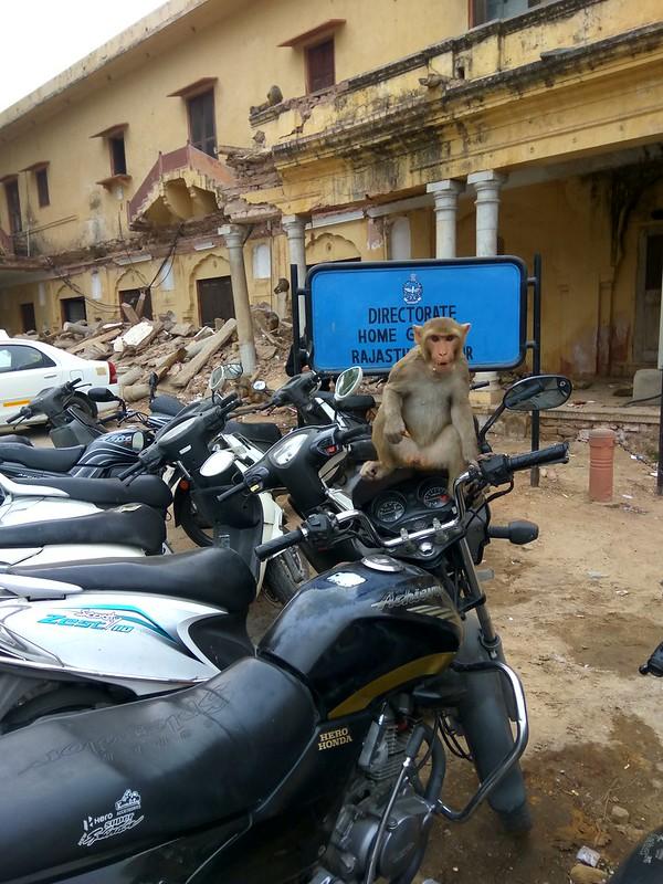 Индия, животные