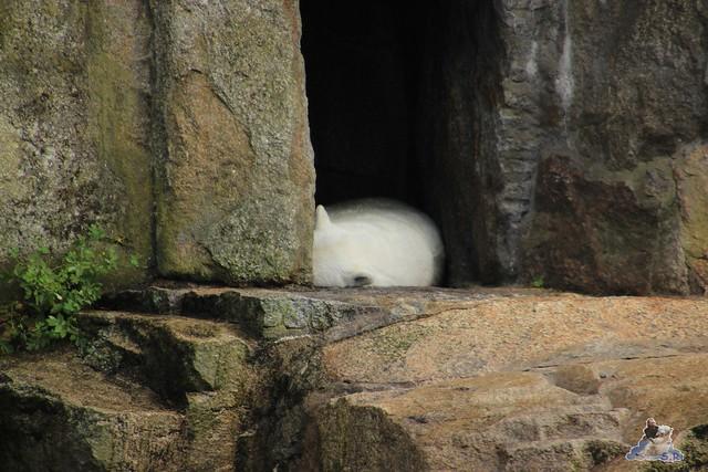 Zoo Berlin 19.06.   201594