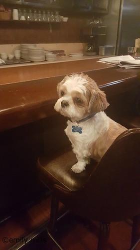 Madison Wi Dog Rescue Groups