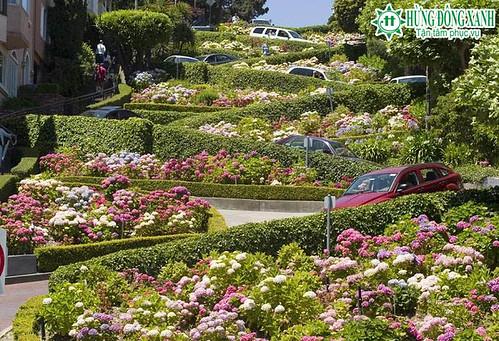 tour du  lịch bờ tây nước mỹ đường hoa lombard