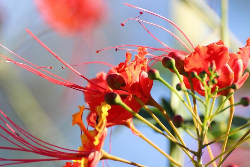 Orange Flowers in Costa Rica