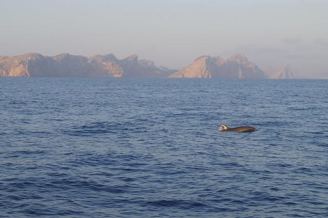 Mallorca Delfine Ausfluge
