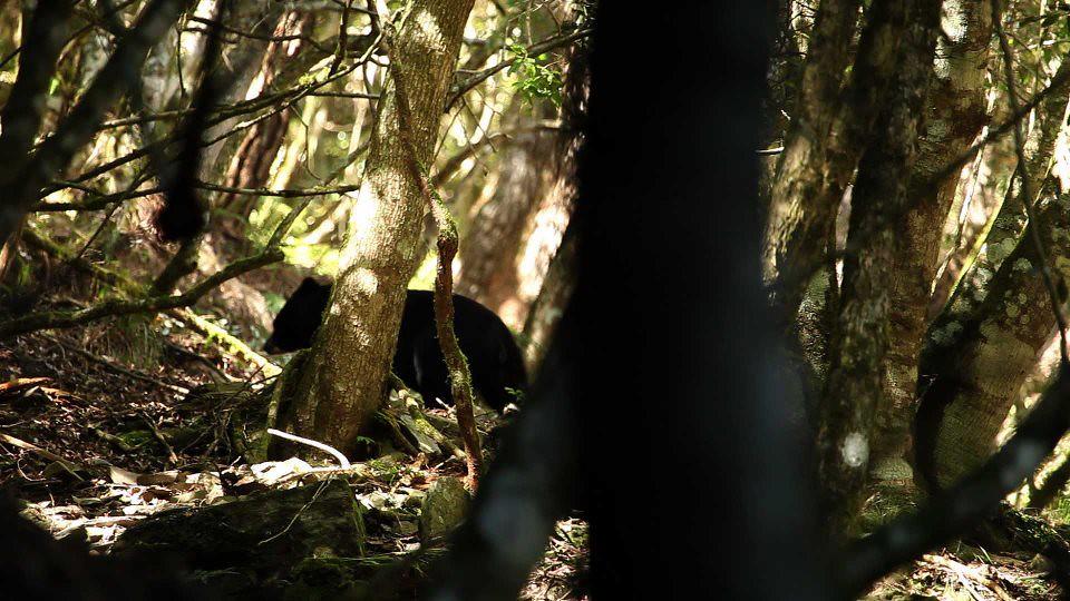 20161210 黑熊森林上映