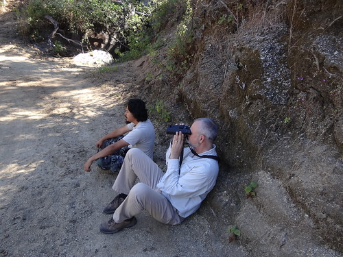 Rick watching Baird's junco