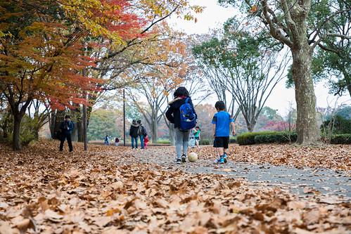 autumn_leaves_2017_09