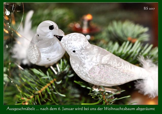 Ausgeschnäbelt! - Tschüss, Weihnachtsbaum ... Nach dem 6. Januar wird der Baum abgeräumt ... Moules Marinières frites ... Muscheln mit selbst gemachten Backofen-Pommes ... Fotos und Collagen: Brigitte Stolle 2017