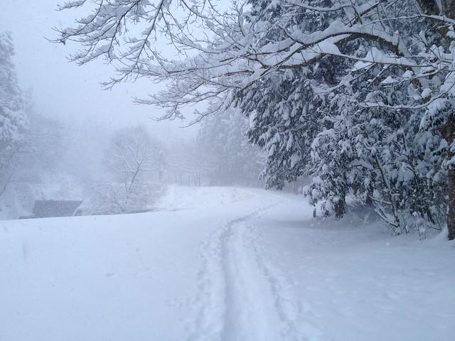 綿向山 登山道への道