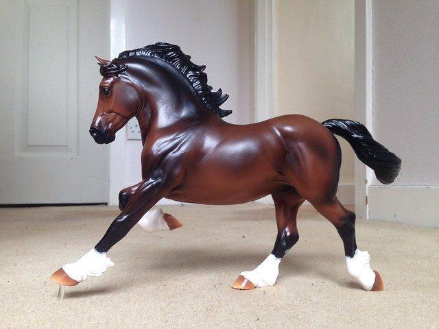 Copperfox Welsh Cob - Celtic Warrior