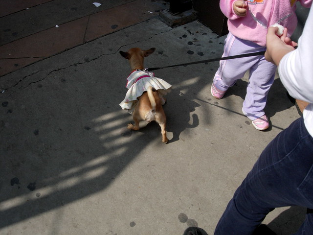 Dog Owner Dresses As Dog S Faavorite Toy