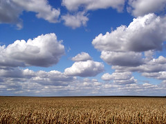 Clouds and Corn | by Kables