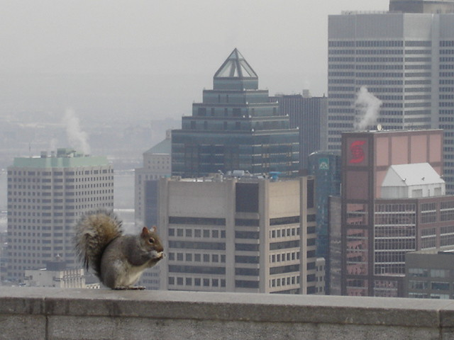Image result for squirrel in city