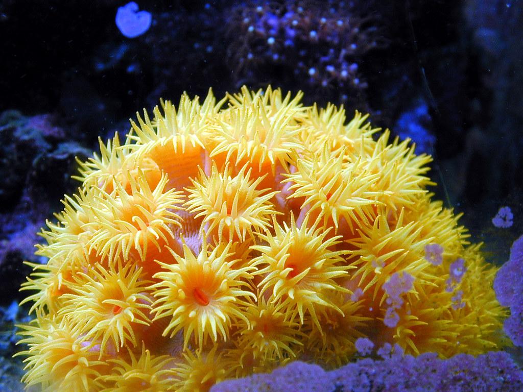 Types Of Reef Building Algase