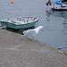 Seagulls in Lyme Regis, UK