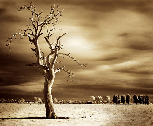 """lost in time"" - infrared photograph, Australia 
