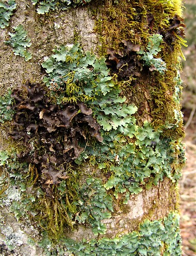 moss and lichens on tree | by zen