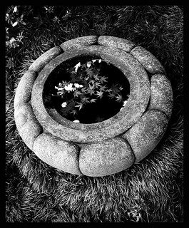 garden-bowl | by strangemagee