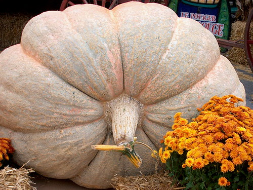 Giant Pumpkin | by judo_dad1953