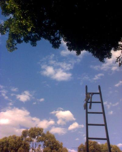 climbing the social ladder essay