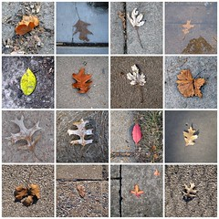Leaves | by dgray_xplane