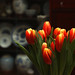 Tulips & Ceramics