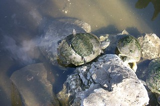 turtles all the way down | by treez44est