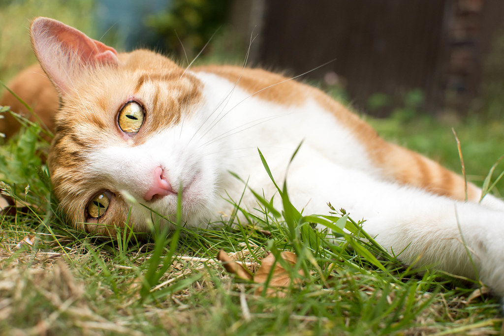 Cat Health Problems, Summer Cat Safety Tips