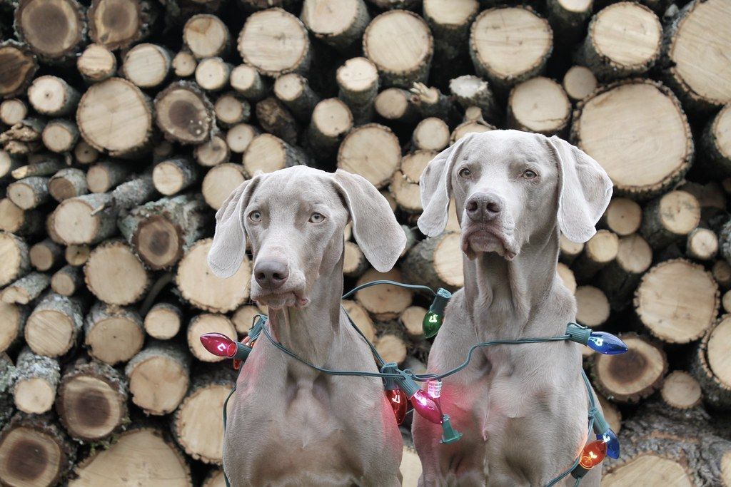 Christmas Card Ready | Lou and Lex were our focal point for … | Flickr