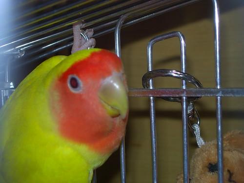Primera foto de Hedwig en casa