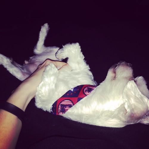 Post op belly rubs