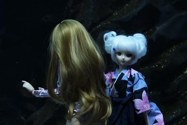 dd aquarium 5