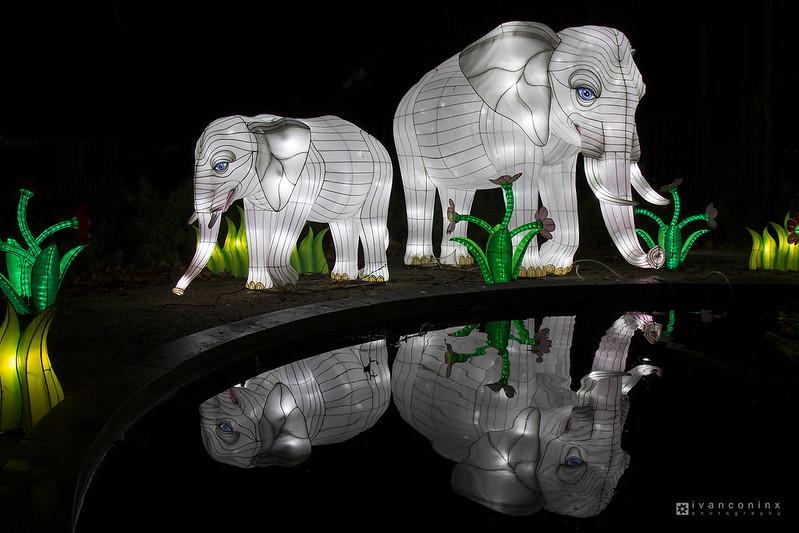 China Light Zoo – Antwerp – 2016 12 27 – 12 – Copyright © 2016 Ivan Coninx