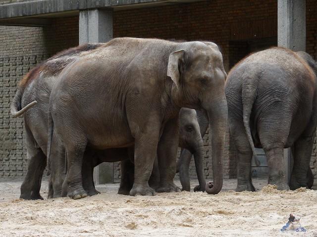 Zoo Berlin 02.06.2015  3