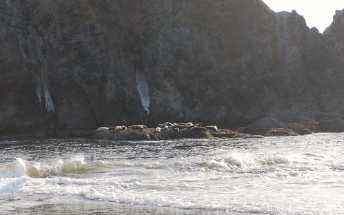 Seals at Coquille Point