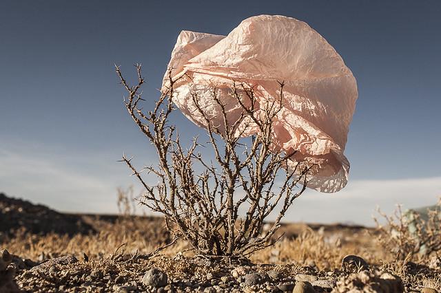 Plastic Trees
