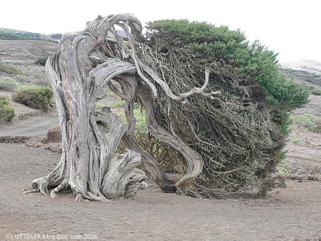 gekrümmter Baum