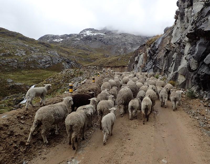 Atasco de camino a la mina de Raura.