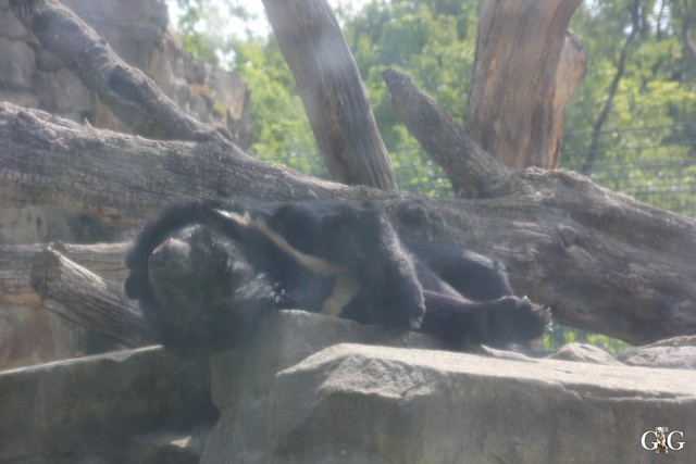 Besuch Zoo Berlin 31.05.20153