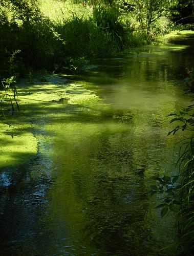 The Pond in Monet's Garden